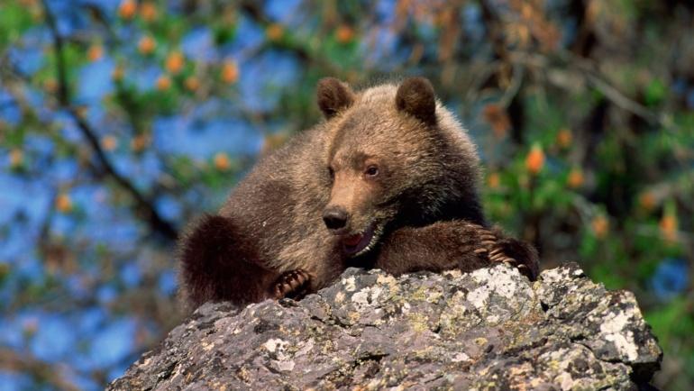 O przyjaźni z niedźwiedziem – opowiadanie gruzińskie